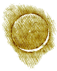 a Leonarda Da Vinci sketch of the Earthshine effect